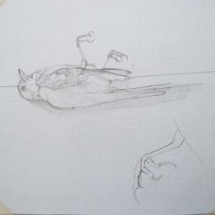 Karen Whittingham, Bird sketch