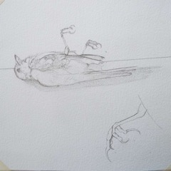 Karen Whittingham, Bird sketch