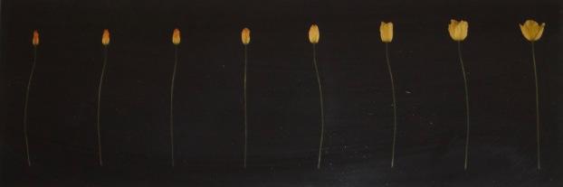 Artist: Jessica Raby | Wales Residency: 2016 Title: Marwolaeth Babi Melyn (death of a yellow poppy) Medium: Digital print of film stills Dimensions: 41cm x 14cm Price: £80 Framed