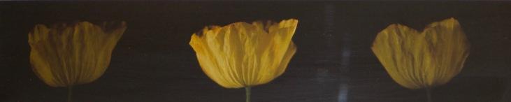 Artist: Jessica Raby | Wales Residency: 2016 Title: Tri Pabi Melyn (three yellow poppy) Medium: Digital print of film stills Dimensions: 41cm x 14cm Price: £80 Framed