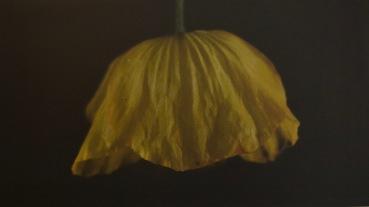 Artist: Jessica Raby | Wales Residency: 2016 Title: Pabi Melyn (a yellow poppy) Medium: Digital print of film stills Dimensions: 41cm x 14cm Price: £80 Framed