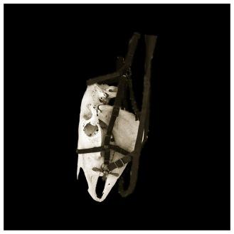 Artist: Sue Kneebone | Australia Title: Horse Skull Medium: Photograph on metallic paper (edition. 1/3) framed £300