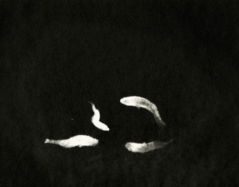 "Martha Orbach | Scotland Medium: drawn photogram Title: Night Fishing Size: 8x10"" Price: £95"
